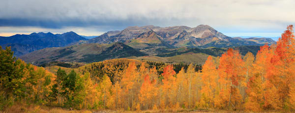 Golden Aspens Sunrise with Timpanogos