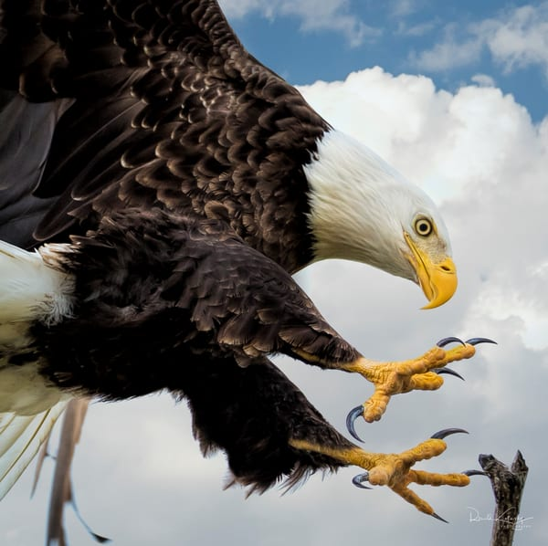 Talons of the Eagle Fine Art