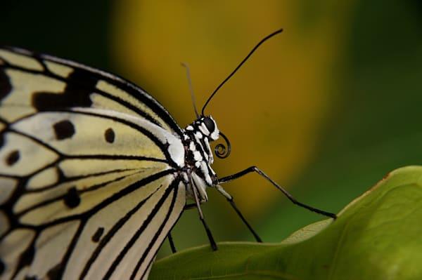 Butterfly 3905844 Copy Art | Lucy Anna Perna