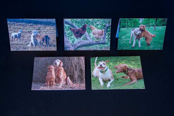 Animal Couples Set of 5 Blank Greeting Cards