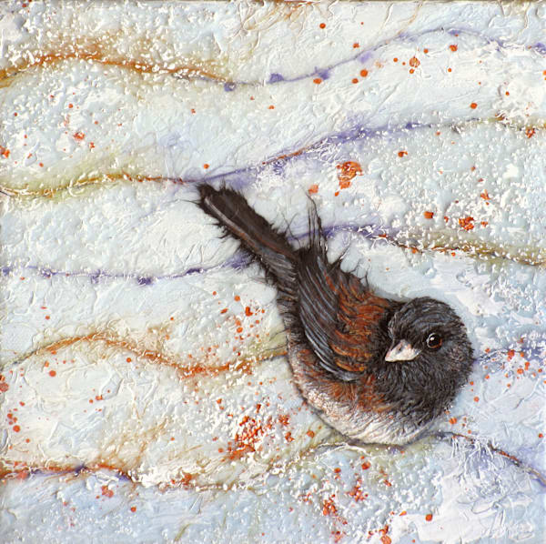 Candied Junco III | Col Mitchell Contemporary Paper Artist