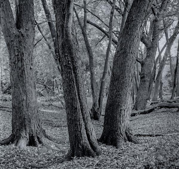 Oak Forest   Minnesota Photography Art by NAMASTE PHOTOGRAPHY