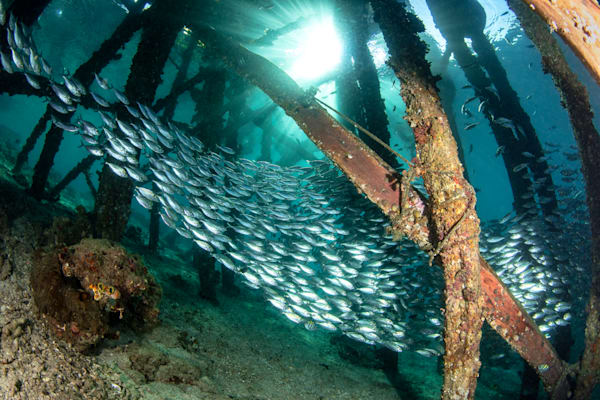 Schooling Fish under a Jetty is an underwater fine art photograph for sale
