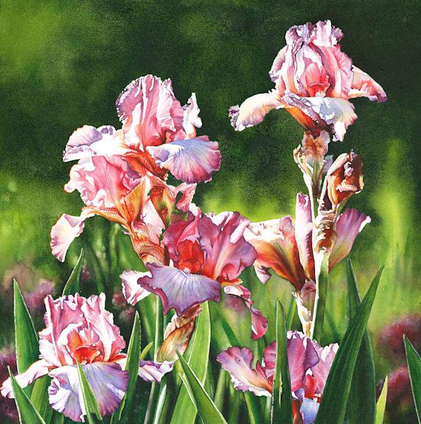 Lilac Rose Iris Watercolor Painting