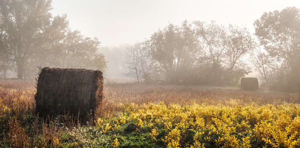 Golden Light-color fine art photograph: Hay bales in autumn fog, by fine art photographer, David Zlotky