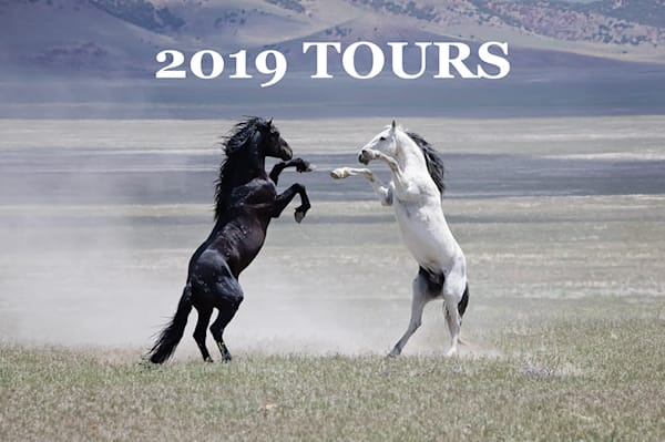 2019 Wild Horse Photography Tours (3 Day Minimum Purchase Required) | Sierra Luna Photography