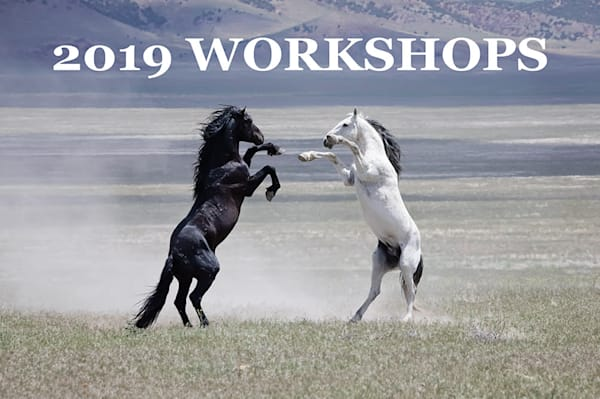 2019 Photography & Business Workshops/Mentoring by Sierra Luna Photography