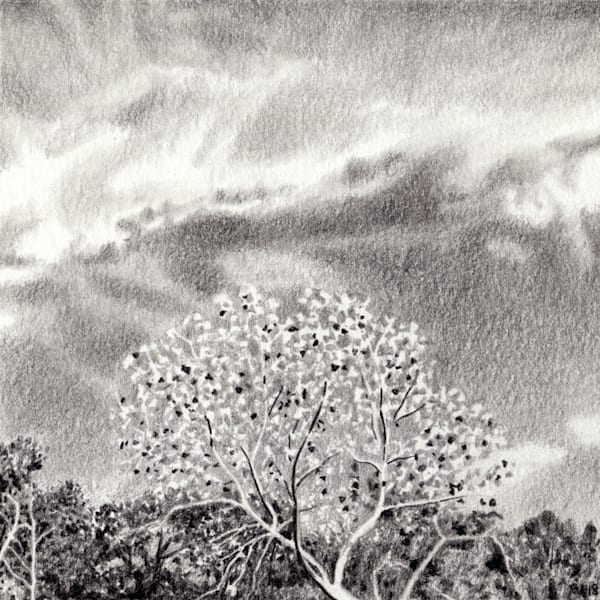 Sycamore, Drawings, The Art of Max Voss-Nester