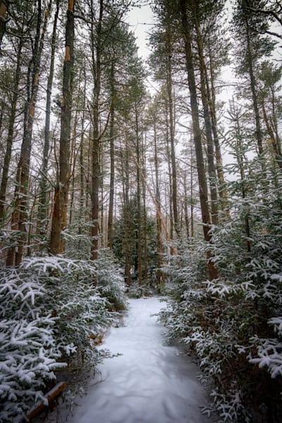 Hemlock Forest Freeport Maine by Rick Berk