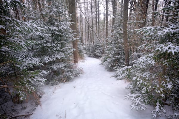 Trail Through The Snowy Forest by Rick Berk
