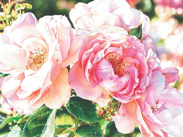 A Rose In Winter #2