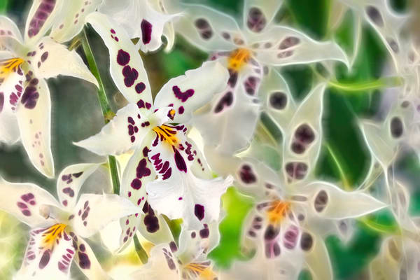 orchid flowers, manipulated orchid flowers, electricity with orchids,