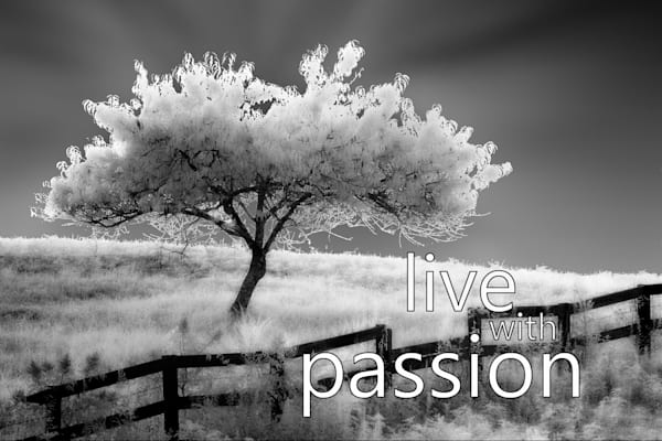 Live With Passion Photography Art | Robert Jones Photography
