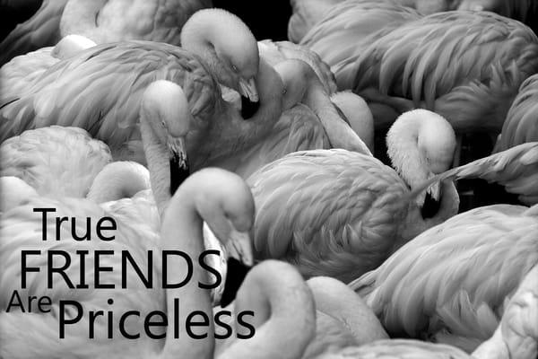 True Friends Are Priceless Photography Art | Robert Jones Photography