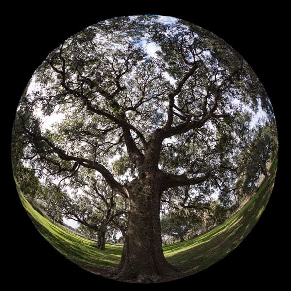 Live Oak Tree Circular, Damon, Texas