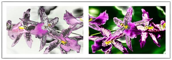 Trillion Amethyst  |  Orchids