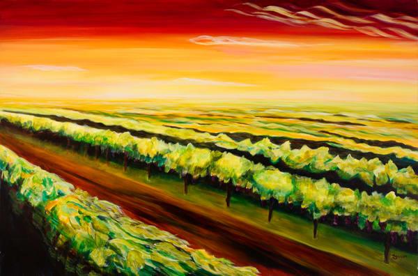 Daybreak in the Vineyard