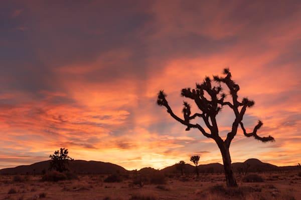 """""""Desert Evening"""" Photograph for Sale as Fine Art."""