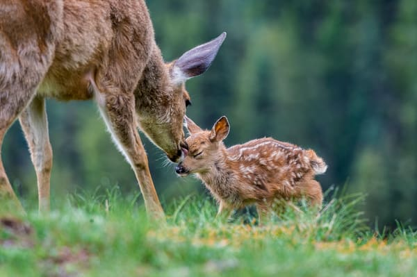 Wild Moms & Young