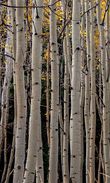 Aspen Vertical Lines Photo Print
