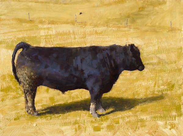 Black bull yellow field canvas print