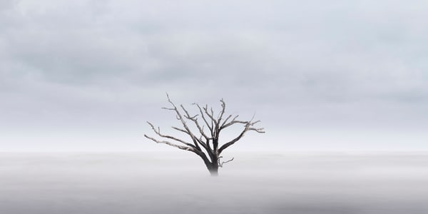 Defiant Photography Art | DE LA Gallery