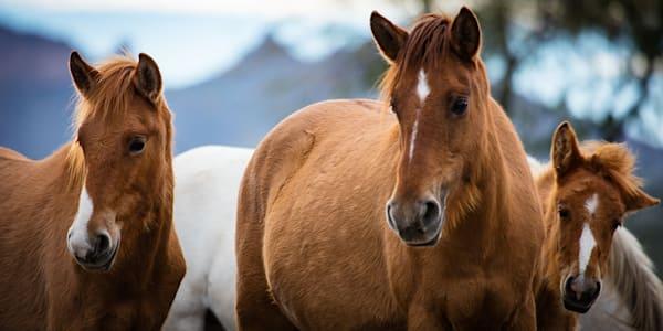 Horse - SR Family Photo Print
