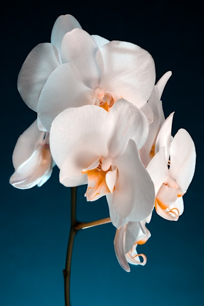 Orchid White Bunch Teal