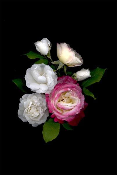 Rose Boquet Photo Print