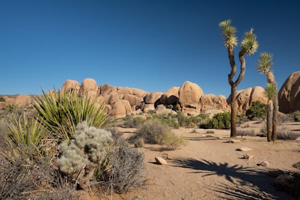 """Hiking in Joshua Tree National Park"" Photograph for Sale as Fine Art."