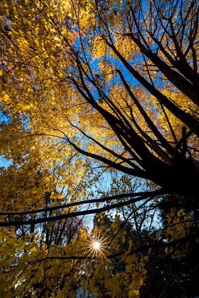 Pa Autumn Art | Brandon Hirt Photo