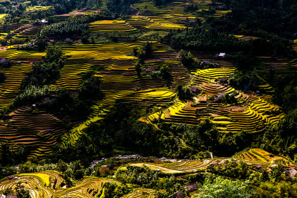 Terraced Rice Fields in Ha Giang