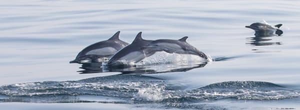 Dolphin Family Photography Art | Leiken Photography