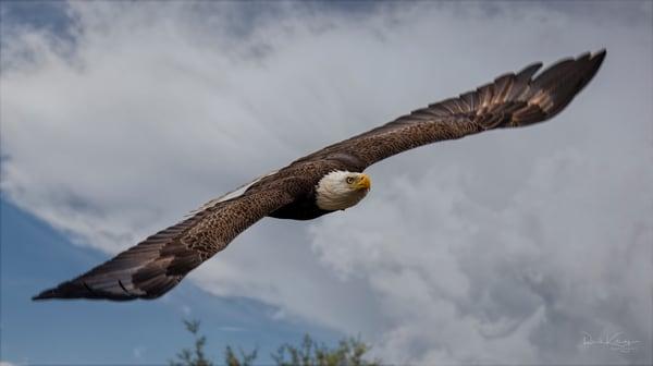 Eagle Head On - Fine Art