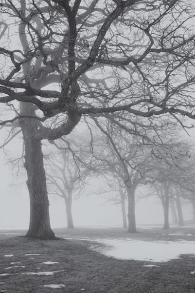 Mid-Winter Fog II Minnesota