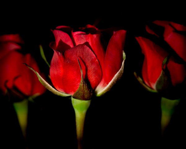 Three Roses Art | Kirk Fry Photography, LLC