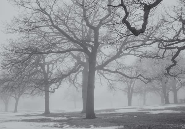 Mid Winter Fog Iii Photography Art | Namaste Photography