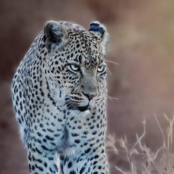 Leopard portrait 3