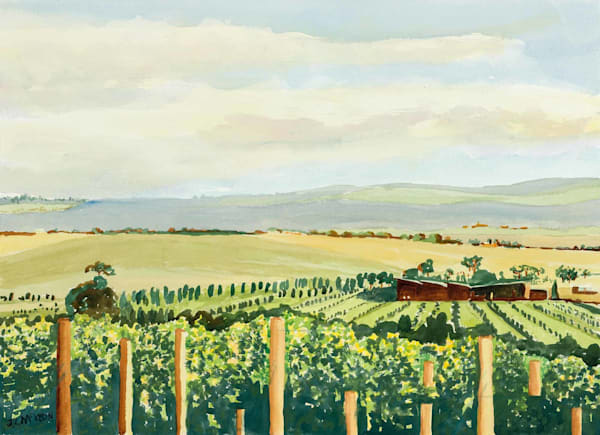 Late afternoon in the Yarra Valley, Victoria.