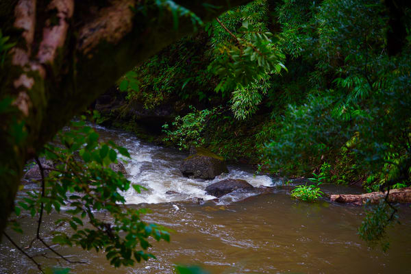 Iao Valley Stream Maui Photography by Bo Bergemann®