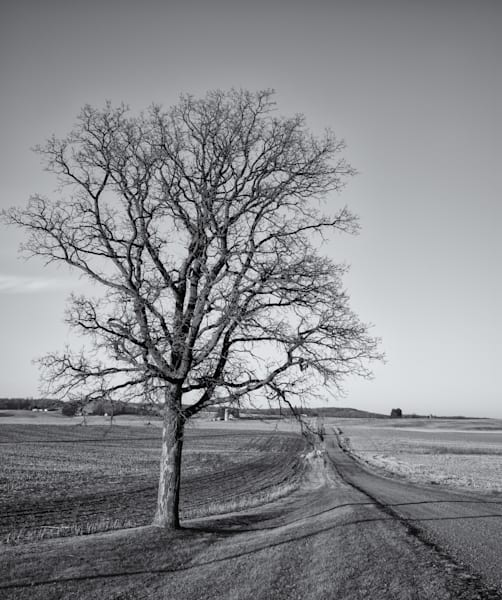 """Lone Sentinel""   Wisconsin Photography Art   Namaste Photography"