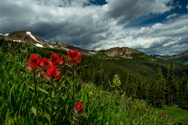 Paintbrush With A View Art | Kirk Fry Photography, LLC