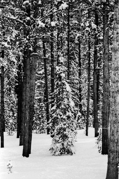 Lone Tree Art   Brandon Hirt Photo