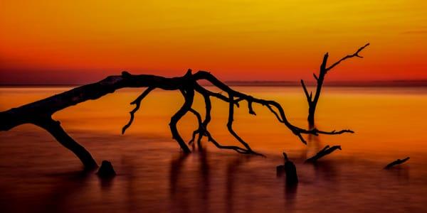 Boneyard Beach Art   Brandon Hirt Photo