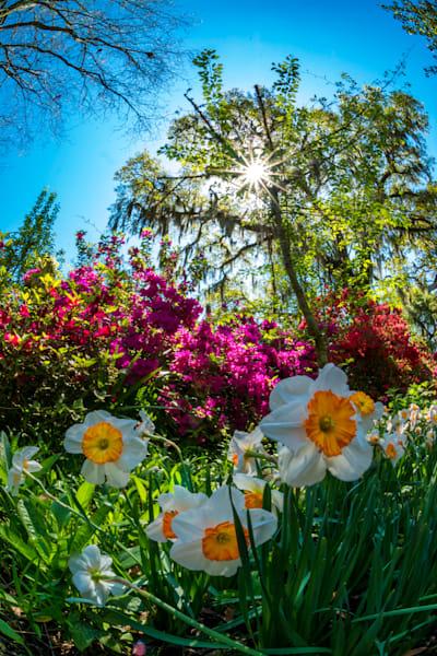 April Flowers in South Carolina