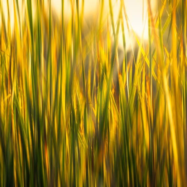 Fall Grass Art | James Patrick Pommerening Photography
