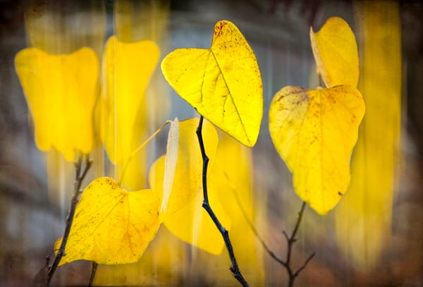 Love Letter From Fall Photography Art | James Patrick Pommerening Photography