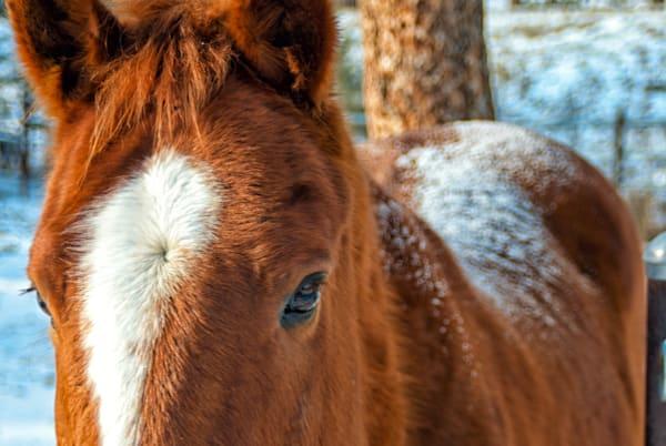 Montana Horse Art | Brandon Hirt Photo