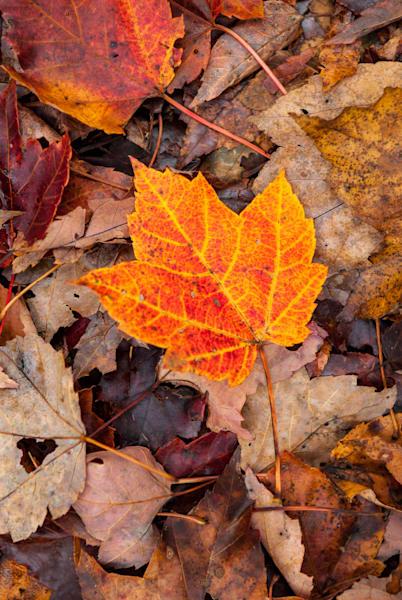 Leaf Art | Brandon Hirt Photo