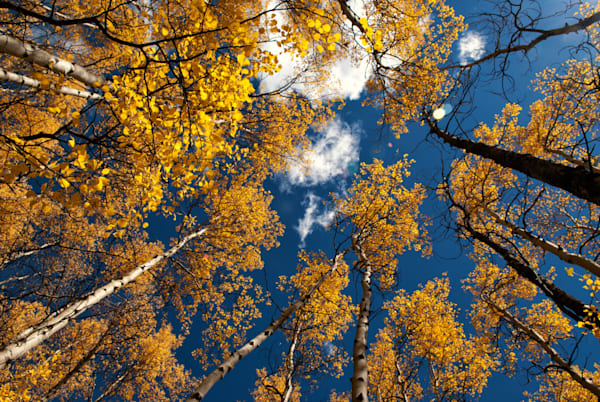 Colorado Aspens Art | Brandon Hirt Photo